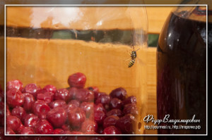Наливка из вишни из самогона в домашних условиях 3